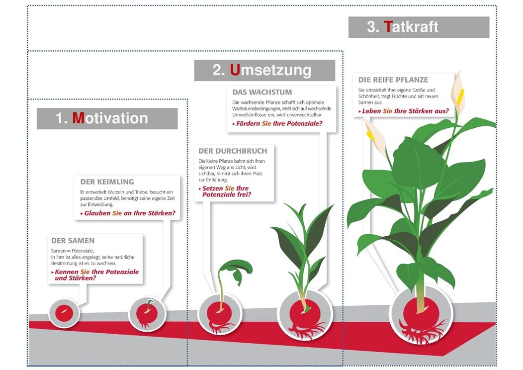 Mut-Pflanze Phasen_160601_3